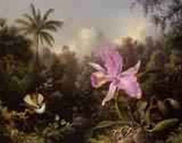 Orchid and Two Hummingburds 1872jpeg